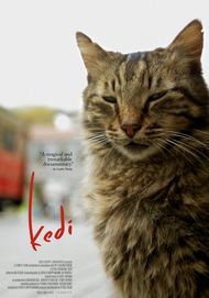 "Movie poster for ""KEDI (2016)"""