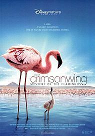 """Movie poster for """"THE CRIMSON WING MYSTERY OF THE FLAMINGOS"""""""